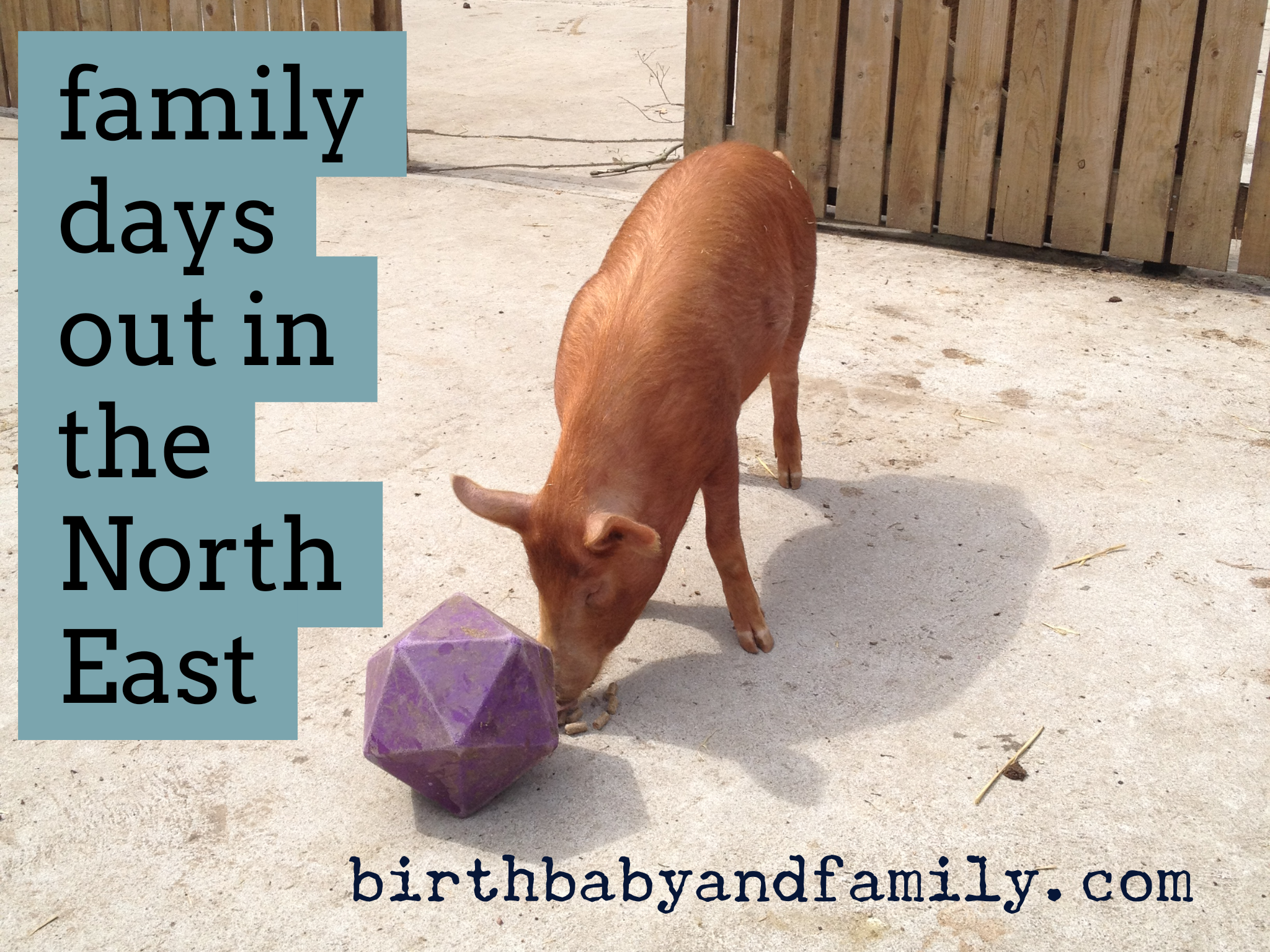 family days out in the north east